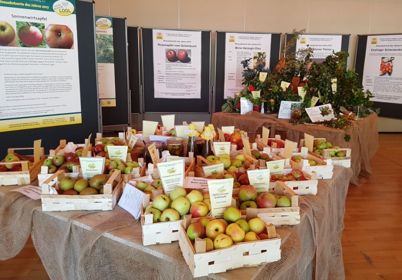 Obstsortenausstellung2017 GS BadHerrenalb