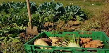 Alten Gemüsesorten auf der Spur! Aktion Sortendetektive